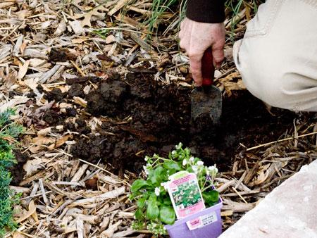 Planting Step 1. Dig.