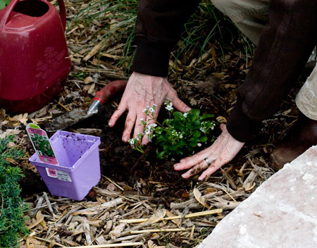 Planting Step 4